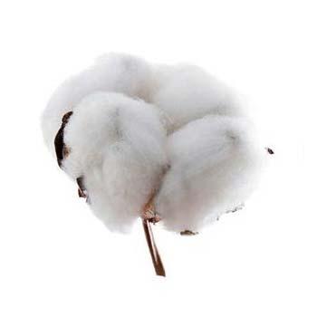 anniversaire de mariage 1 an noces de cotton