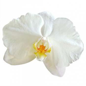 anniversaire de mariage 55 ans noces d'orchidée